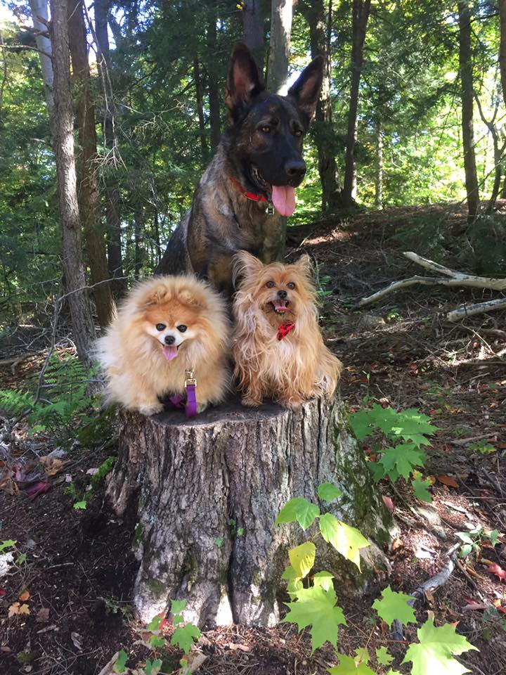 3-on-a-stump